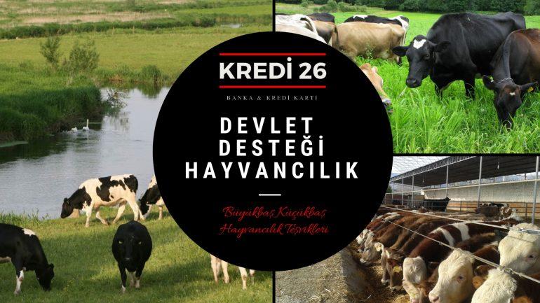 Devlet Desteği Hayvancılık, Devlet Destekli Büyükbaş Küçükbaş Hayvancılık Teşvikleri Nelerdir