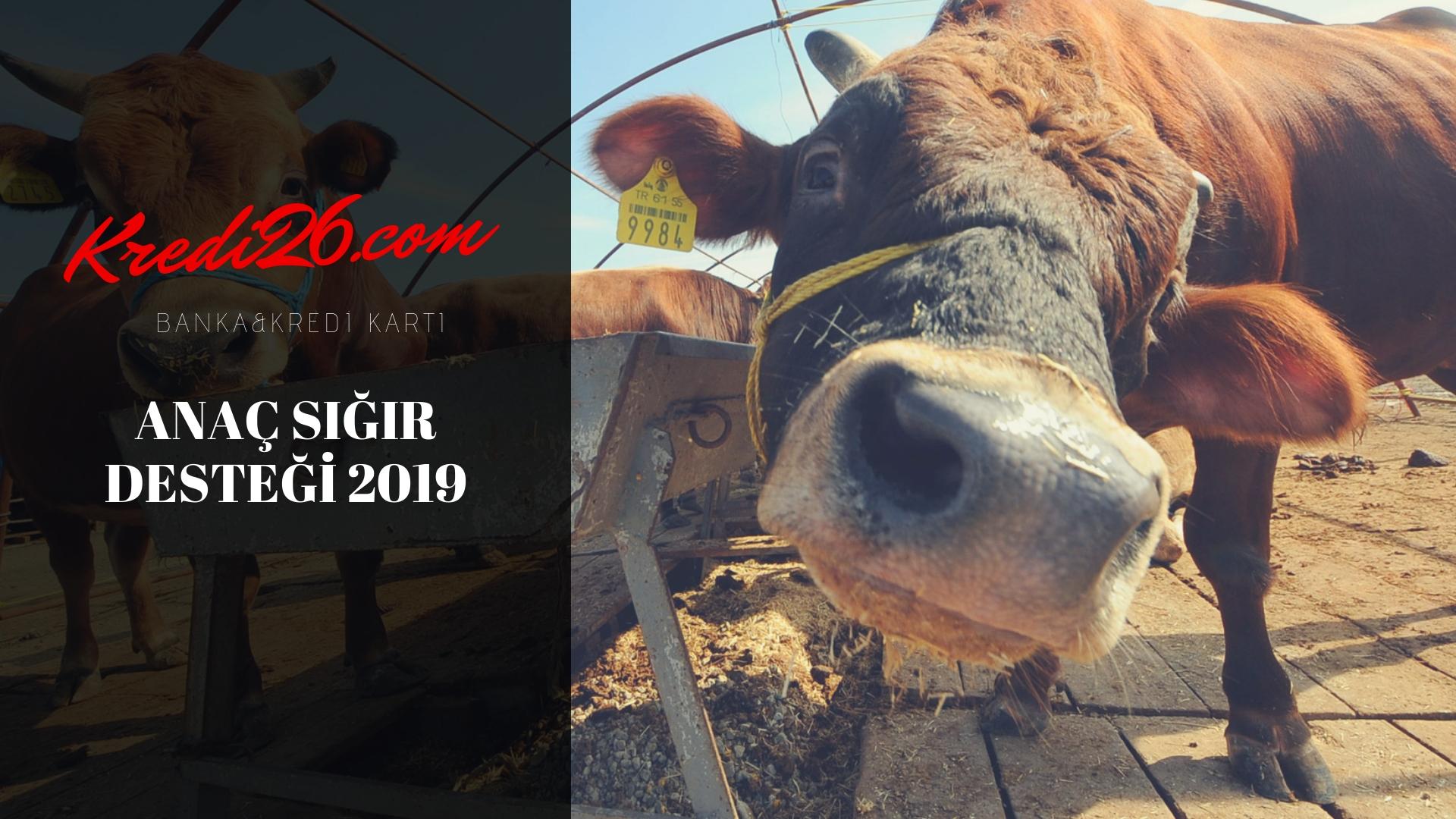 2019 Yılı Hayvancılık Destekleri (Hayvancılık Desteklemeleri)