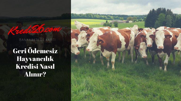 Geri Ödemesiz Hayvancılık Kredisi Nasıl Alınır?, 2 Yıl Geri Ödemesiz Hayvancılık Kredisi Nasıl Alınır?