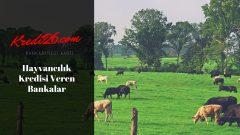 Hayvancılık Kredisi Veren Bankalar, Büyükbaş ve küçükbaş hayvan kredisi veren bankalar