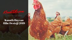 Kanatlı Hayvan Hibe Desteği 2019, Faizsiz Tavuk Çiftliği Kredisi 2018 Hibe Şartları