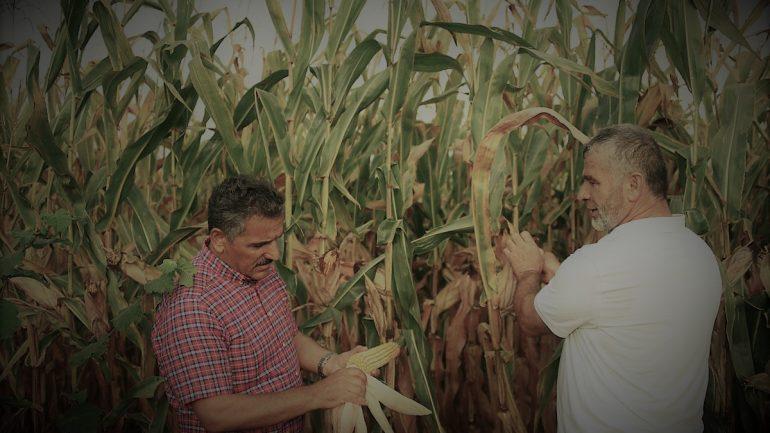 Çiftçilere 700 Milyon Liralık Ödeme Yapılıyor