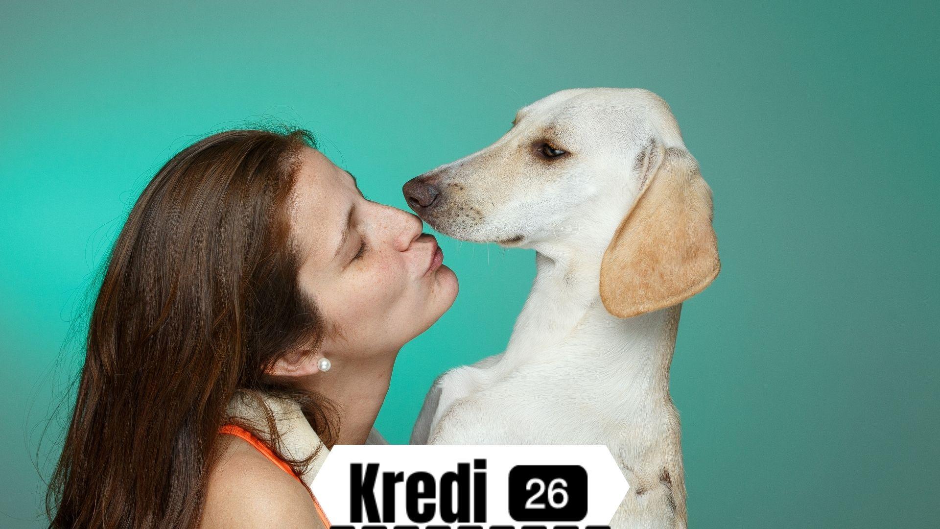 Köpek Sahiplenme Ücretsiz