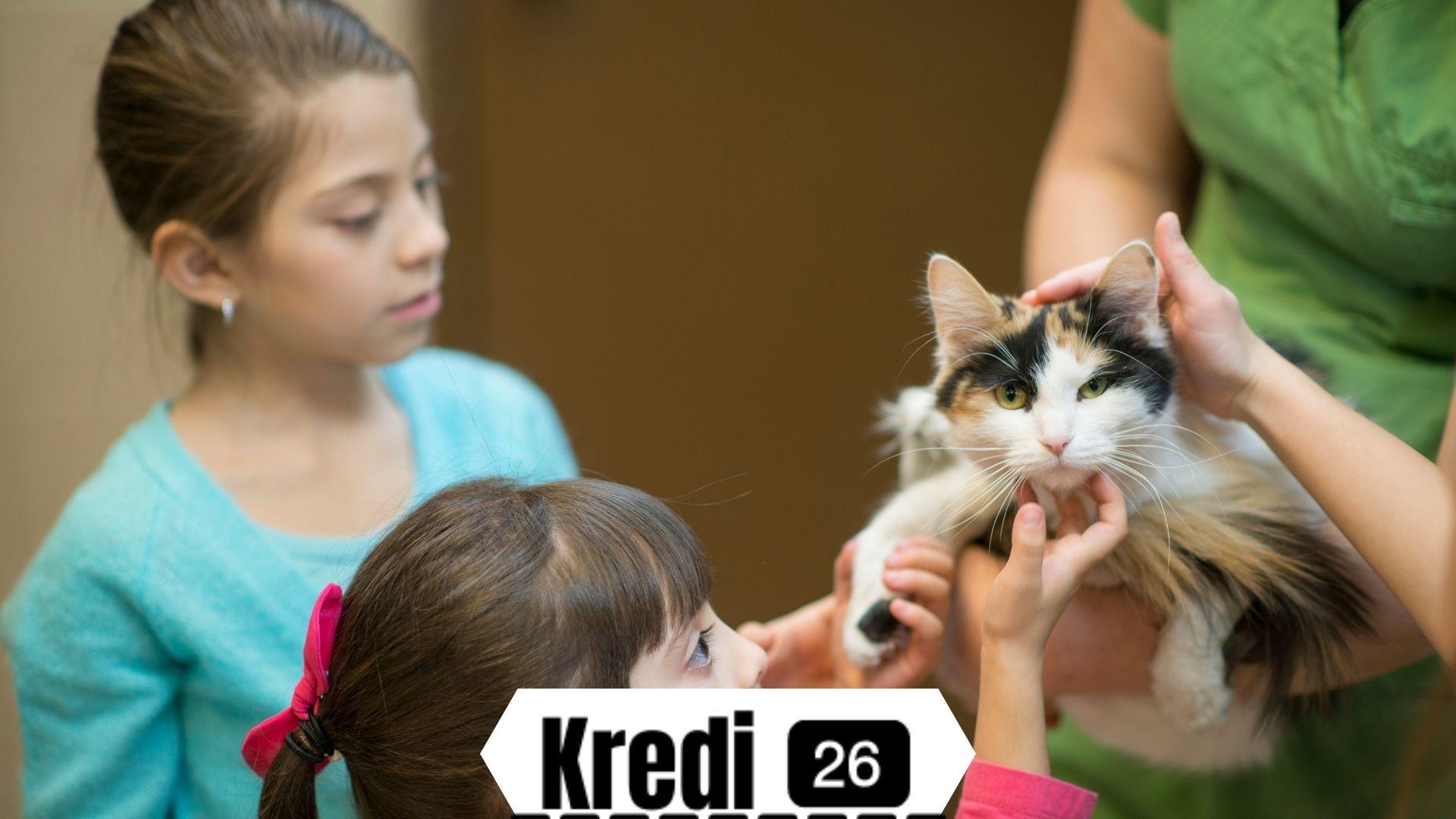 Ücretsiz Kedi Sahiplendirme