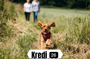 Ücretsiz Köpek
